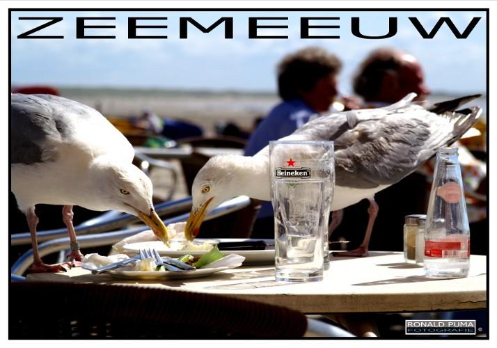 Poster IJmuiden