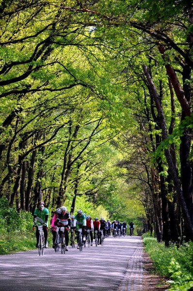 Ronde Van Nijmegen