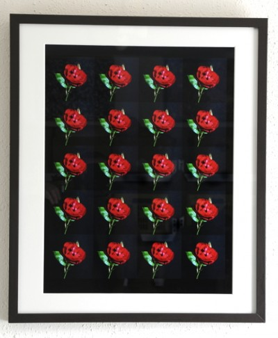 Roos / Rose