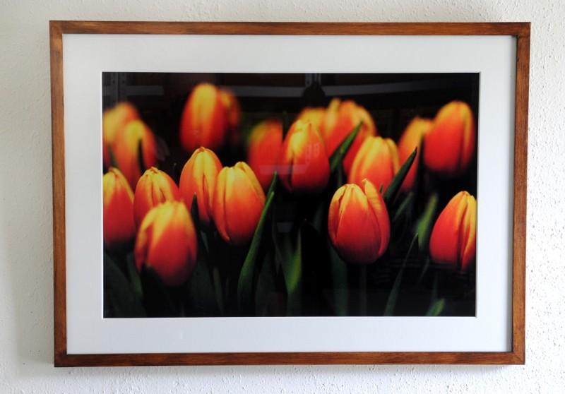 Tulpen /Tulips #2