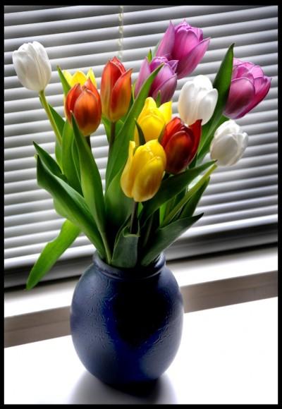 Tulpen / Tulips #4