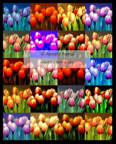Tulpen / Tulips #5