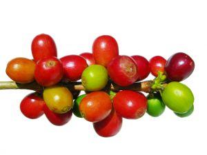 Koffiebonen ondergaan ook de nodige stappen voor we koffie hebben.